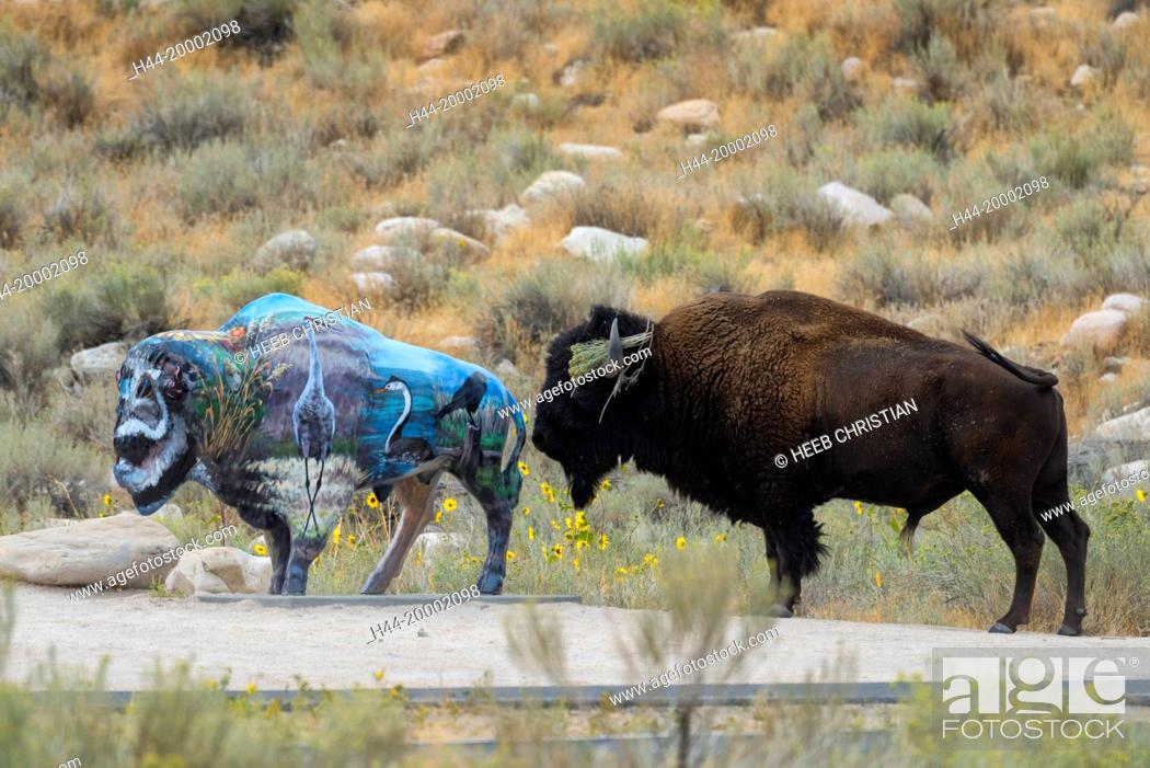 Stock Photo: Utah, Davis County, Antelope Island State Park, Bison with Bison sculpture.