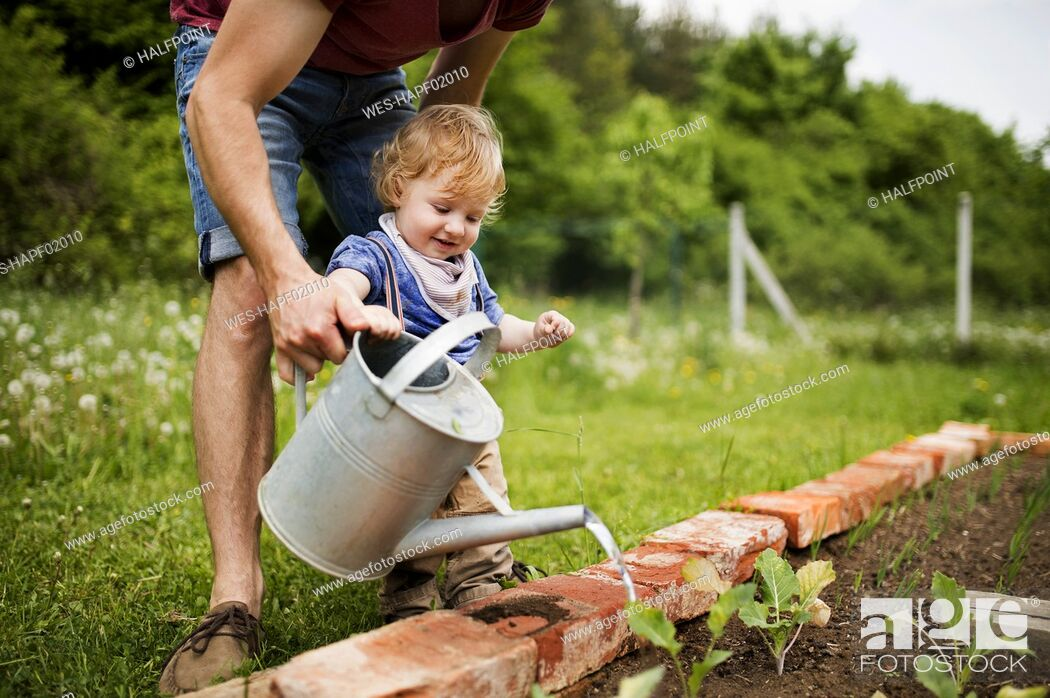 Stock Photo: Father with his little son in the garden watering seedlings.