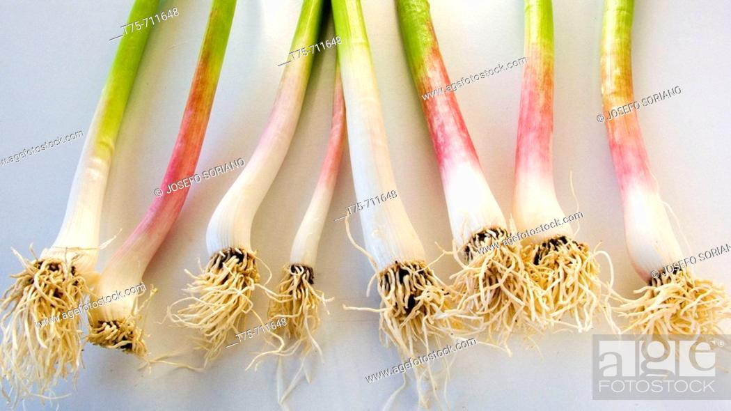 Stock Photo: Spring onions.