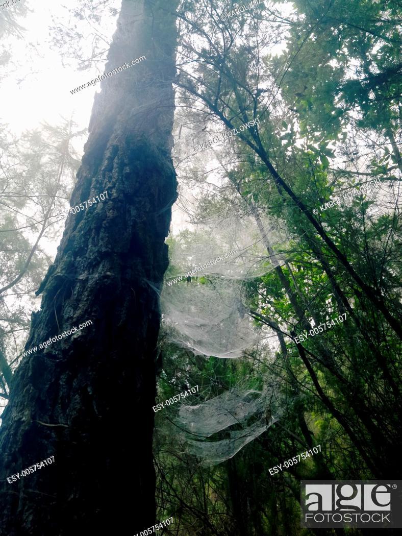 Stock Photo: Bosque de Los Tilos - beautiful forest on La Palma, Canary Islands, Spain.