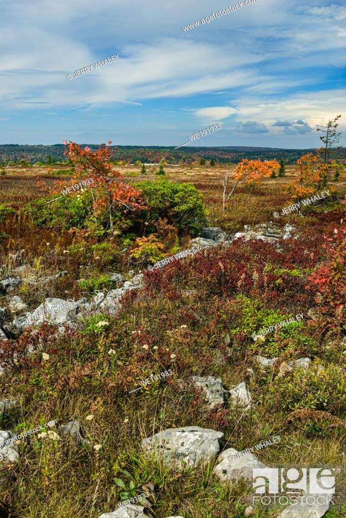 Stock Photo: Autumn Colors at Dolly Sods in the Monongahela National Forest in West Virginia.