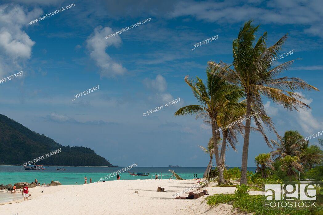Stock Photo: Palm tree on Sunrise beach, Ko Lipe, Thailand.