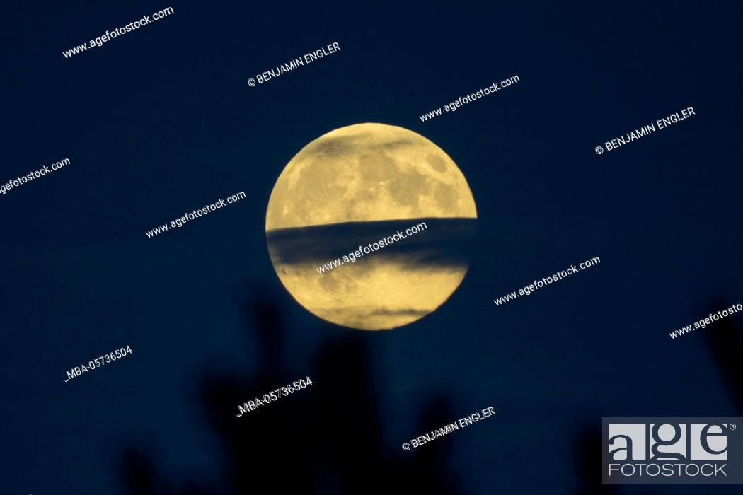 Stock Photo: Full moon in the background, treetops blurred in the foreground.