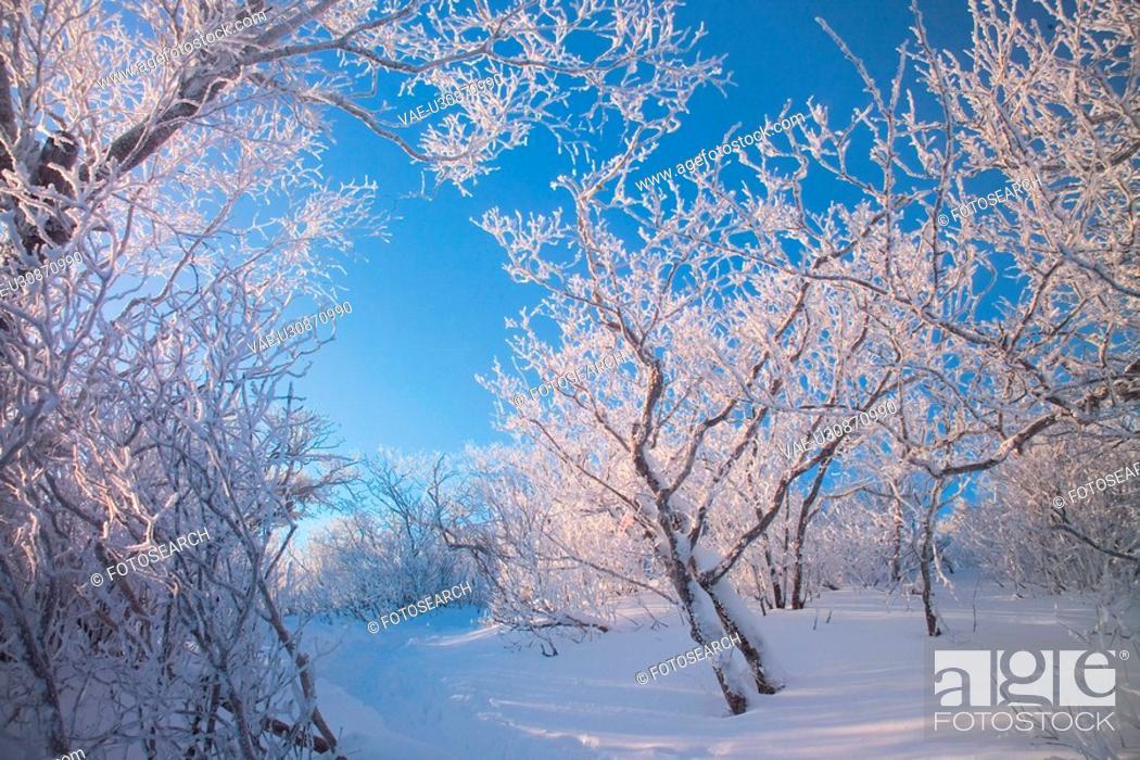 Stock Photo: freezing, snow, cold, winter, mountain, freeze, tree.