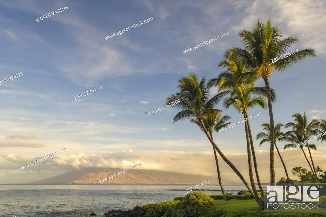 Imagen: Coconut palm trees and west Maui mountains in early morning light from Wailea; Maui, Hawaii.
