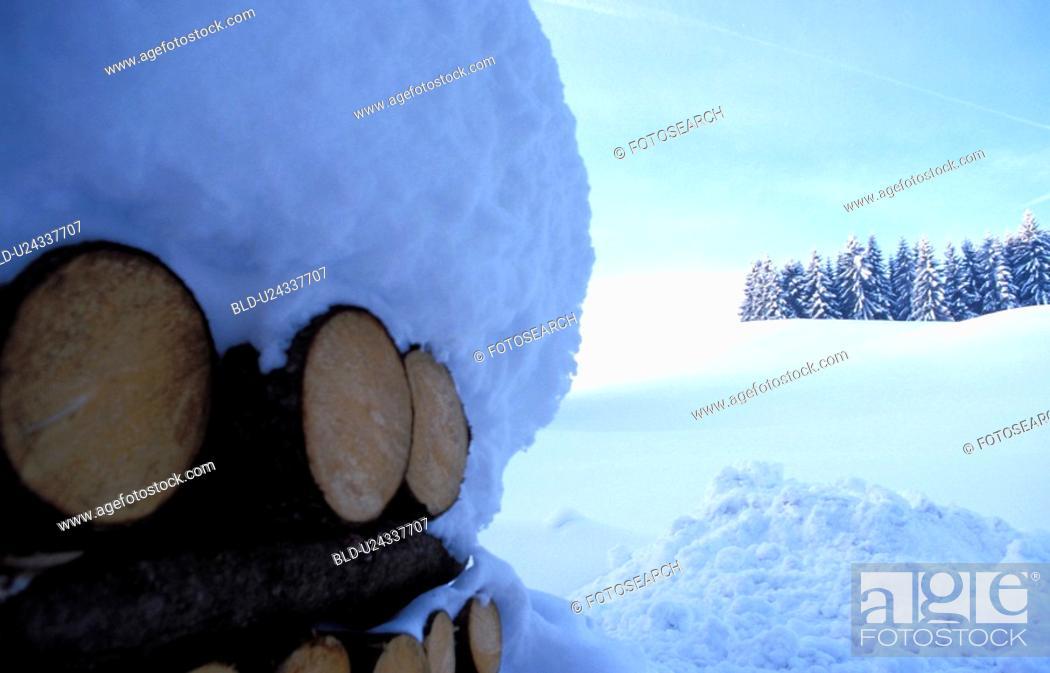 Stock Photo: cold, blauphoton, cellar, branch, bough, alexander.