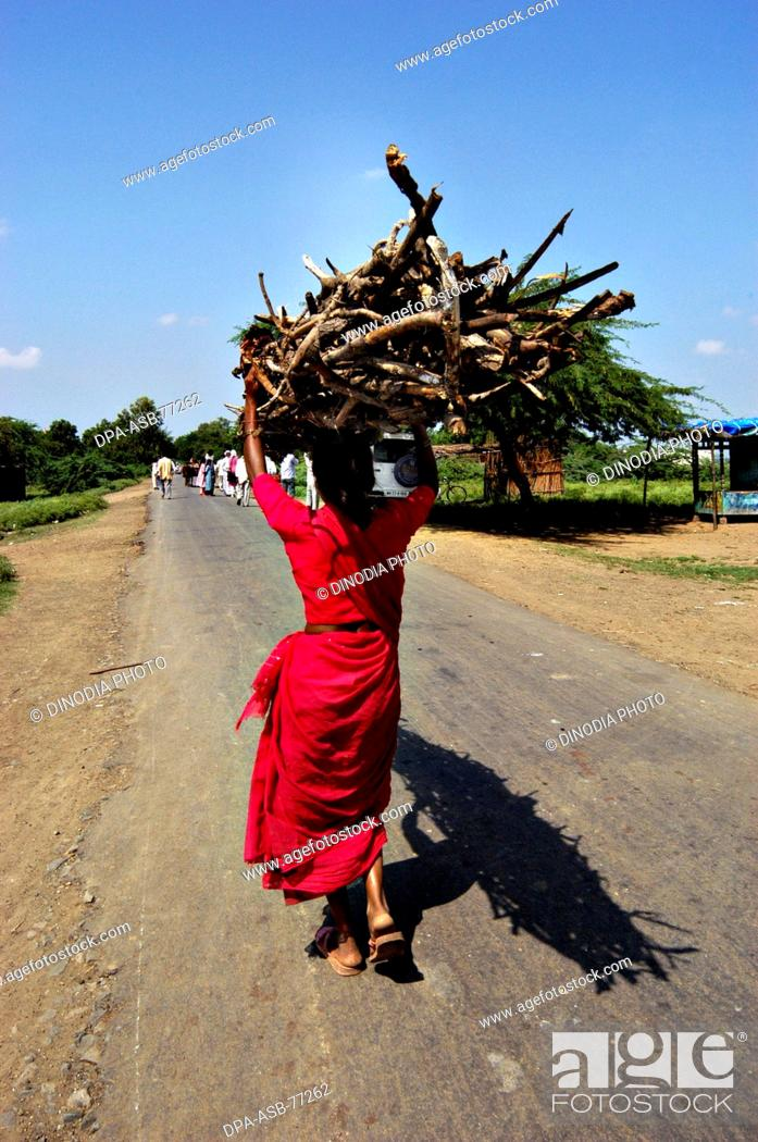 Stock Photo: Indian rural village woman carrying dry braches of broken tree on her head to be used as fuel for cooking ; at Nanded ; Maharashtra ; India.