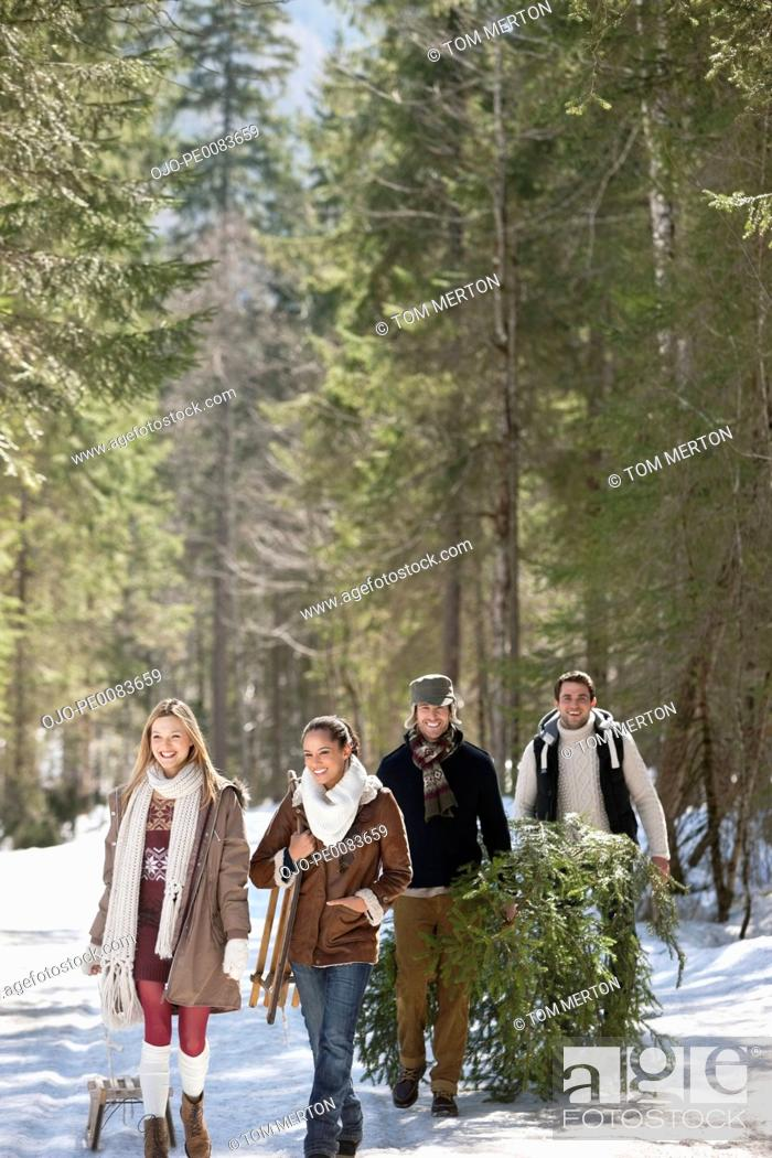 Stock Photo: Smiling couples with fresh cut Christmas tree and sled in snowy woods.