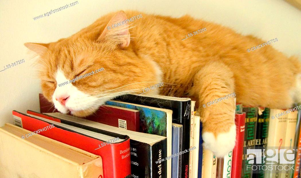 Stock Photo: Cat sleeping on books.