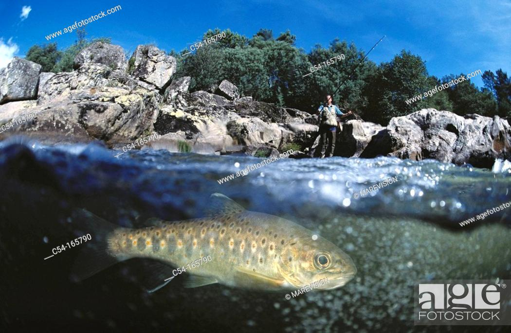 Stock Photo: Trout in river Tea. Galicia, Spain.