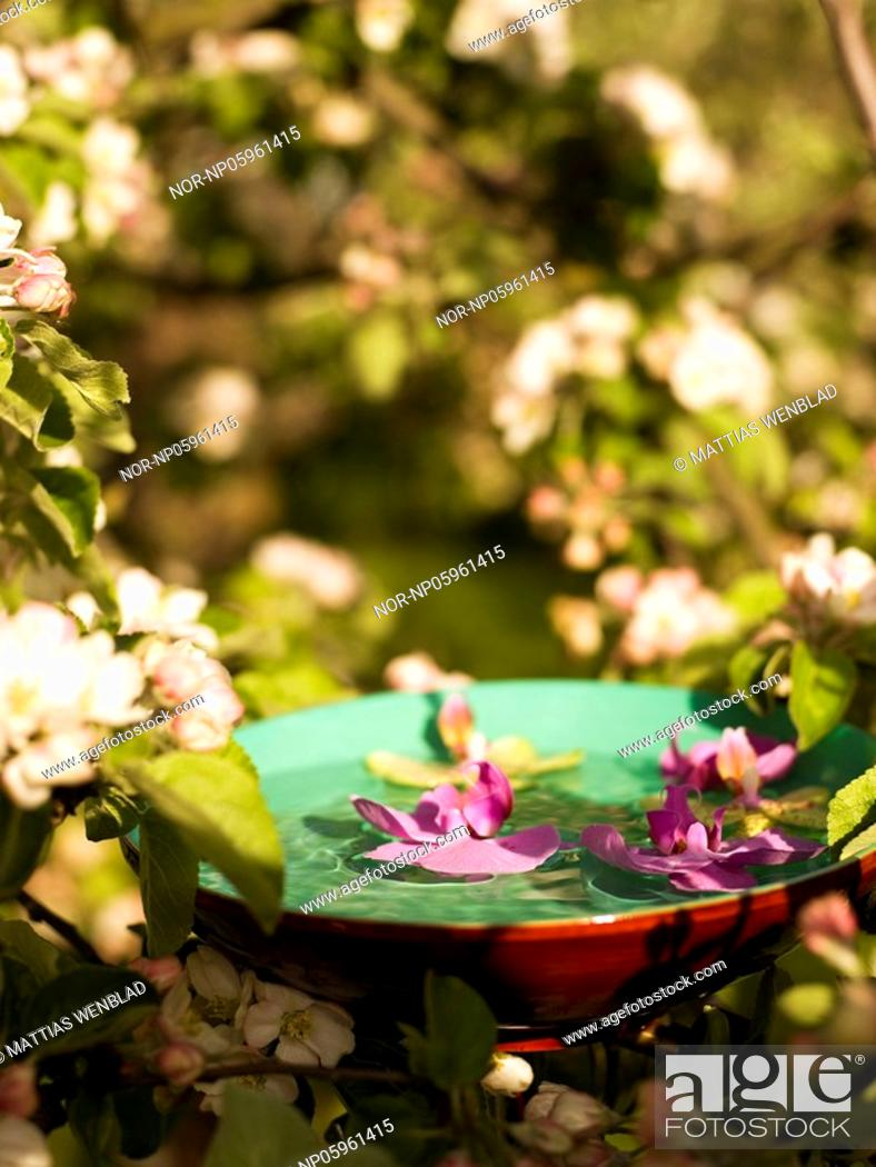 Stock Photo: Purple flowers in a bowl.