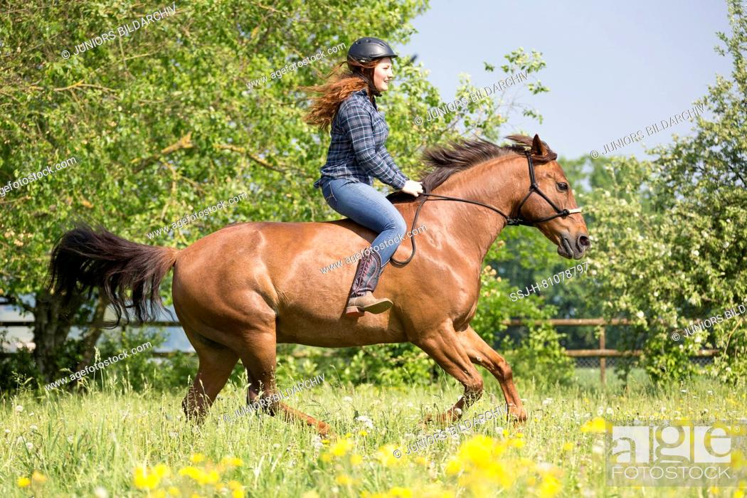 Stock Photo: Missouri Fox Trotter. Red-haired young woman on chestnut gelding glloping on a pasture. Switzerland.